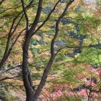 鳳来寺山と県民の森➕もっくる新城のモーニング