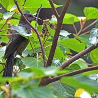 沖縄探鳥ツアー3日目 与那川周辺、比地大滝