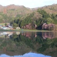 中綱湖の桜:大町市中綱湖