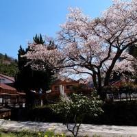 桜舞い散る石見銀山へ