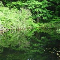 6月23日  池塘緑映