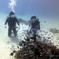 水温が上がってる!沖縄ダイビング 那覇シーマリン