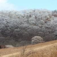 長野県佐久市の東端にある佐久荒船高原では、早朝の冷え込みで霧氷ができました