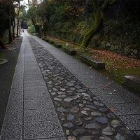 1日の散歩 ( 今宮神社、大徳寺、十二坊への散歩で晩秋便り )
