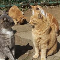 人はネコを人間に近い存在と認識している。