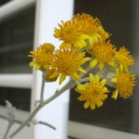 椿家の植物事情+ここ一週間くらいのまとめ+学園Xリプレイ雑感&今後の予定、などなど。