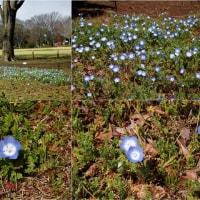 春の花々が活動開始
