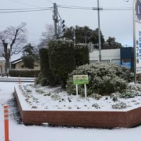 2017年1月15日 雪景色