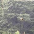くも・クモ・蜘蛛 20170720