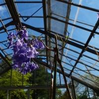 こども植物園・花色々2