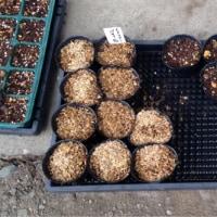 プランター整理と種まき