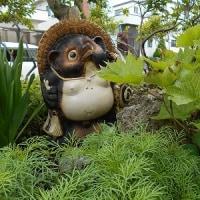 """我が家にきて三十数年庭の真ん中で草花たちを見守っている「愛すべき""""タヌ""""」"""