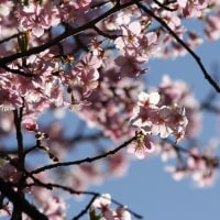 花森日記:如月、花散らす風