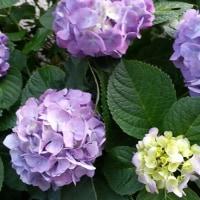 今日の花・・・希望の手紙