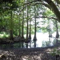 『篠栗九大の森』で森林浴