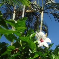 また来ました沖縄