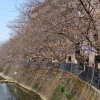 横浜都市緑化フェアが始まりますの巻