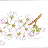 花が集まって 寄り添って ピンク色~