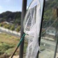 活躍する網