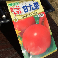 トマト・キャベツ・カリフラワーの種まき(温床)