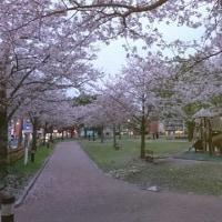 遅れた満開の花便り➠今日の共研公園