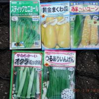 新たに3種類播種  スティックセニョール・まくわ瓜・トウモロコシ