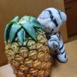 パイナップルもろた~♪(*^▽^)/★*☆♪