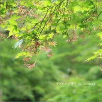 日光の名庭園「松屋敷」・初夏