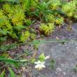 7月22日の花