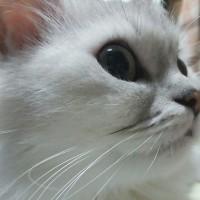 にゃん生を2倍生きた猫