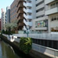 都心の さくら 桜<田町