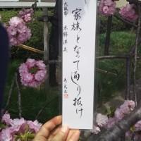 「桜の通り抜け2017」(造幣局)