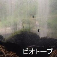 色色便り~iroirodayori~  おでかけ日和