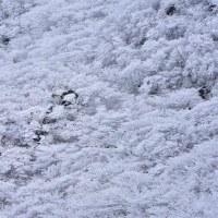 牧ノ戸峠の冬模様9・・・【いな】