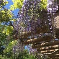衣笠山は春真っ盛り