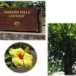 ハワイハイライト-12-7月6日ハワイ島一周ツァー-2-