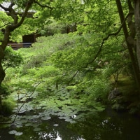 永観堂 水無月の緑趣