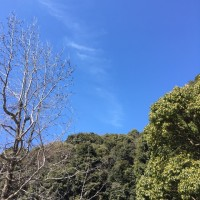 復活の木々