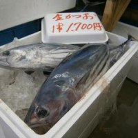 「マリンパル女川おさかな市場 銀鮭・かつお祭り」開催!