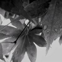 モノクロームの雨