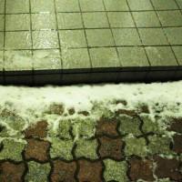 なんかね雪が積もったよ・・・(ΦωΦ)