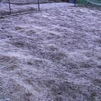 平成28年12月7日・今朝の東祖谷-4.0℃