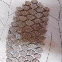 ゆづ教室とウミウシ