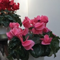 植物園のお花たち。。