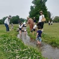 """~~~  初夏の公園と""""なんじゃもんじゃ""""の花  ~~~"""