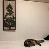 クリスマスツリーとこたつ