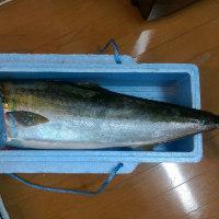 12月11日青島太平洋マラソン~釣りへ