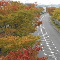 奈良から京都へ、また奈良へ