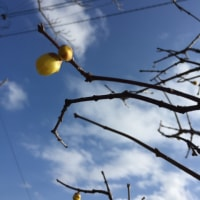 冬の花ロウ梅