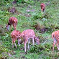 2016ネパール紀行・・・チトワン国立公園・・・エレファント・サファリ―で出逢った動物